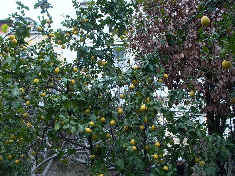 giardino-via-foria
