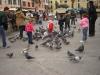 contiamo-i-colombi
